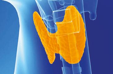 Endocrinología y metabolismo